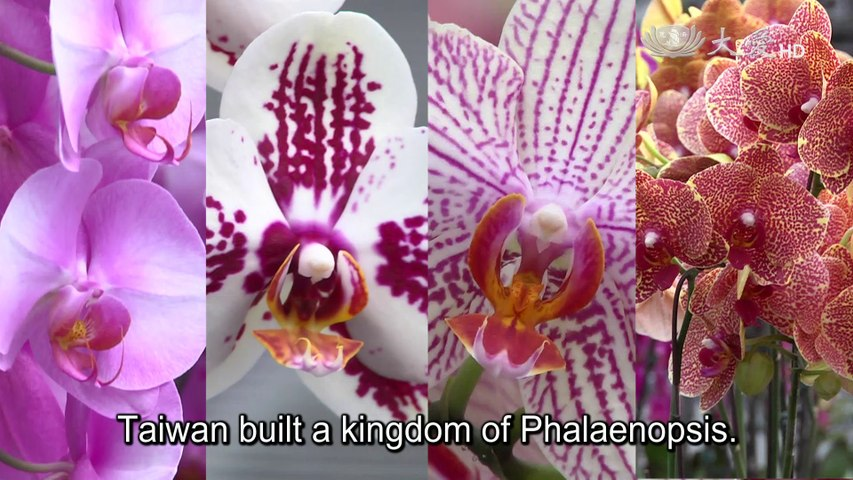 The Orchids of Happiness (DaAi Documentaries in Depth 107)