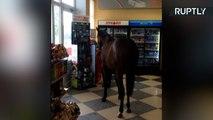 A Horse Walks into a Convenience Store...