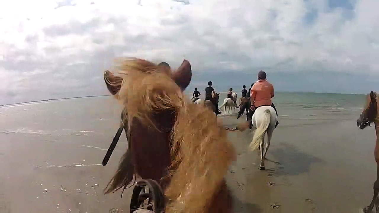 Horse Riding Horses for
