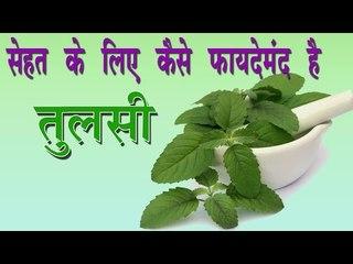 सेहत के लिए कैसे फायदेमंद है तुलसी ## Health Benefits of Tulsi ## Ayurvedic Tips