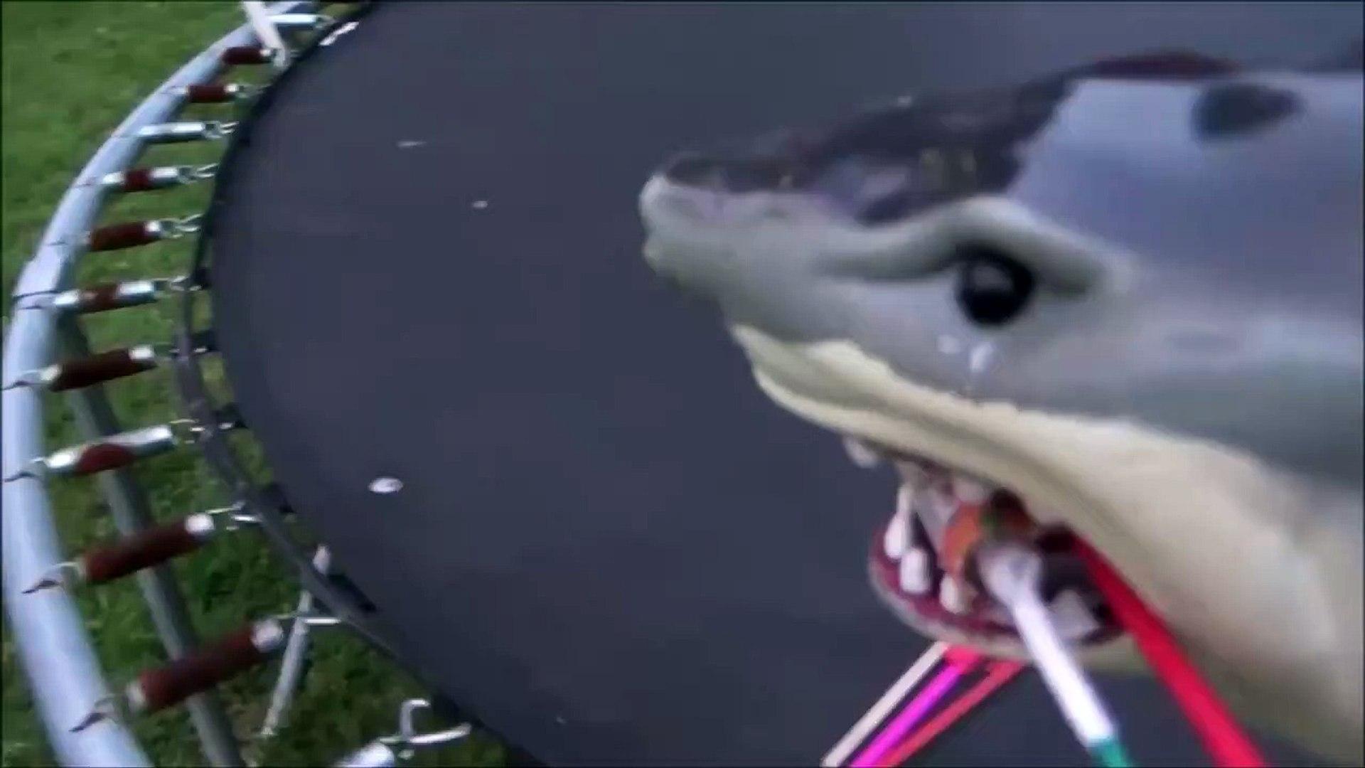 Sharks vs Bottle Rockets 'Toy Shark Lighting Fireworks'-3N1wz