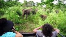 Elephants for Kids - ild Animals Video for Children - Elephants Playing