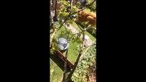 Quand ton chat coincé dans l'arbre préfère sauter en mode Base Jump plutot que d'aller dans tes bras