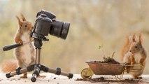 Des écureuils devenus photographes !
