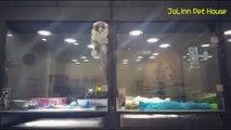 Un chaton se sent seul et s'évade de son enclos pour rejoindre son pote