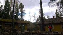 Il est chaud le bucheron : abattre un arbre entre 2 maisons