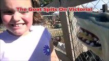 Pet Shark Feeding Pig & Goats @ Petting Zoo Toy Sharks For Children