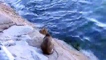 Le chat regarde au fond de l'eau. Puis la caméra capte ce moment tout simplement parfait!