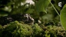 Un papa grenouille sauve 1000 enfants - ZAPPING SAUV