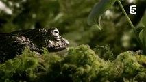 Un papa grenouille sauve 1000 enfants - ZAPPING SAUVAGE-VAUMQnUiFxg