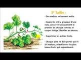 Comment tailler un plant de melon? / How to cut a melon plant?