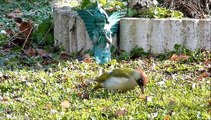 a visité aussi mon jardin