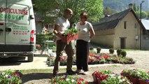 Hautes-Alpes : des barquettes de surfinias offertes aux habitants pour la fête des fleurs de Freissinières