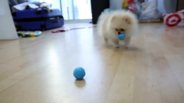 Testing Out Weird Dog Gadgets With NEW PUPPY!-