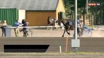 Un cheval s'empale sur une barrière pendant une course de trot.