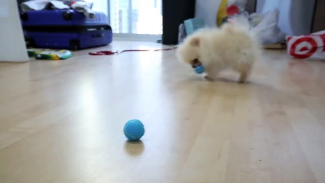 Testing Out Weird Dog Gadgets With NEW PUPPY!-EJZwM