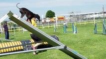 Concours canin sélectif d'Agility - Concours canin sélectif d'Agility
