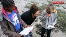 Concarneau. Les élèves aident les chercheurs à étudier la laisse de mer