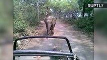Agitated Elephant Chases Down Jeep Full of Safari Tourists