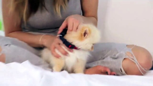 Testing Out Weird Dog Gadgets With NEW PUPPY!-EJZwMyd2mAg