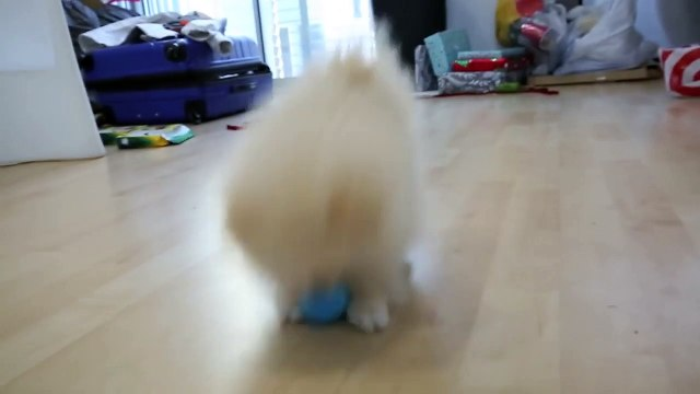Testing Out Weird Dog Gadgets With N