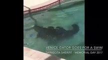 Floride : Frayeur pour une famille américaine qui trouve... un alligator dans sa piscine ! - VIDÉO