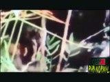 4 VIDEOS DE ALIENIGENAS REALES CAPTURADOS POR LA CAMARA - ALIEN UFO TOP EXTRATERRESTRE