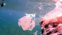 Au Mexique, des plongeurs montrent comment le plastique a dévasté la mer