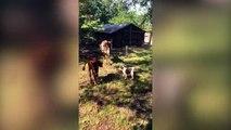 Ce bébé chien joue les chiens de berger pour la première fois