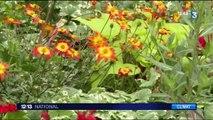 Sécheresse : incapable de les arroser, Lillebonne donne ses fleurs à ses habitants