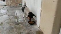 Ce chien ne fait confiance à personne, même pas à sa propre patte