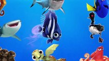 LEARN SEA ANIMALS & WATER ANIMALS NAMES AND SOUND REAL OCEAN SOUND ANIMAL VIDEO FOR KIDS P