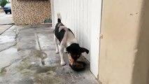 Ce chien fou attaque sa propre patte pendant qu'il mange !
