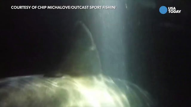 Fishermen tags huge great white shark off Hilton Head-S