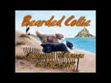 Régionale d'Elevage Bearded Collie 2017