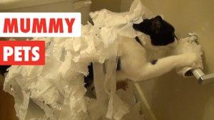 Mummy Pets | Funny Pet Video Compilation 2017