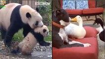 Endangered Animals - Extinct Animals - Zoo Animals - Funny And Cute Animals #7 - Hayvanlar Alemi