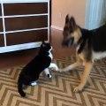 Un chien et un chat se battent (à voir jusqu'au bout !)