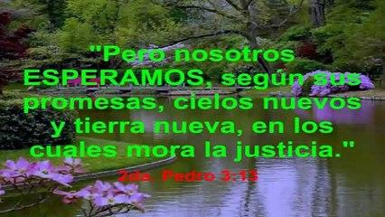 Falsos Profetas 1