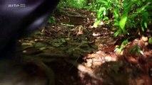 Entre Terre et Ciel HD - Kourou, la Porte vers les Etoiles (2015)
