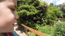 VLOG - Pique-nique et Animaux Rigolos au Parc de la Tête d'Or -)