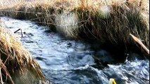 15 Minutes Nature Sounds +++ A Flowing Stream in Spring +++ Better Sleep + Sounds for Studying