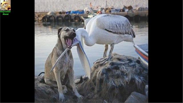 Endangered Animals - Extinct Animals - Zoo Animals - Funny And Cute Animals #0 - Hayvanlar Alemi