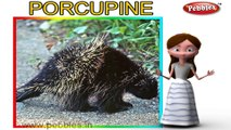 Porcupine | 3D animated nursery rhymes for kids with lyrics | popular animals rhyme for kids | Porcupine song | Animal songs | Funny rhymes for kids | cartoon | 3D animation | Top rhymes of animals for children