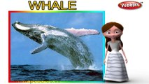 Whale | 3D animated nursery rhymes for kids with lyrics | popular animals rhyme for kids | Whale song | Animal songs | Funny rhymes for kids | cartoon | 3D animation | Top rhymes of animals for children