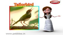 Tailor Bird   3D animated nursery rhymes for kids with lyrics    popular Birds rhyme for kids  tailor bird song   bird songs   Funny rhymes for kids    cartoon   3D animation   Top rhymes of bird for children