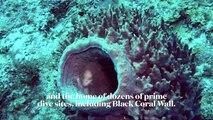 Scuba Diving Belize's Black Coral Wall
