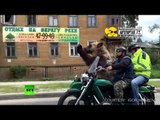 Biker Bear: Not only humans ride motorcycles on Russian streets