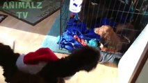 Drôle chiens et chats contre farci animaux mignonne animal de compagnie vidéos ré