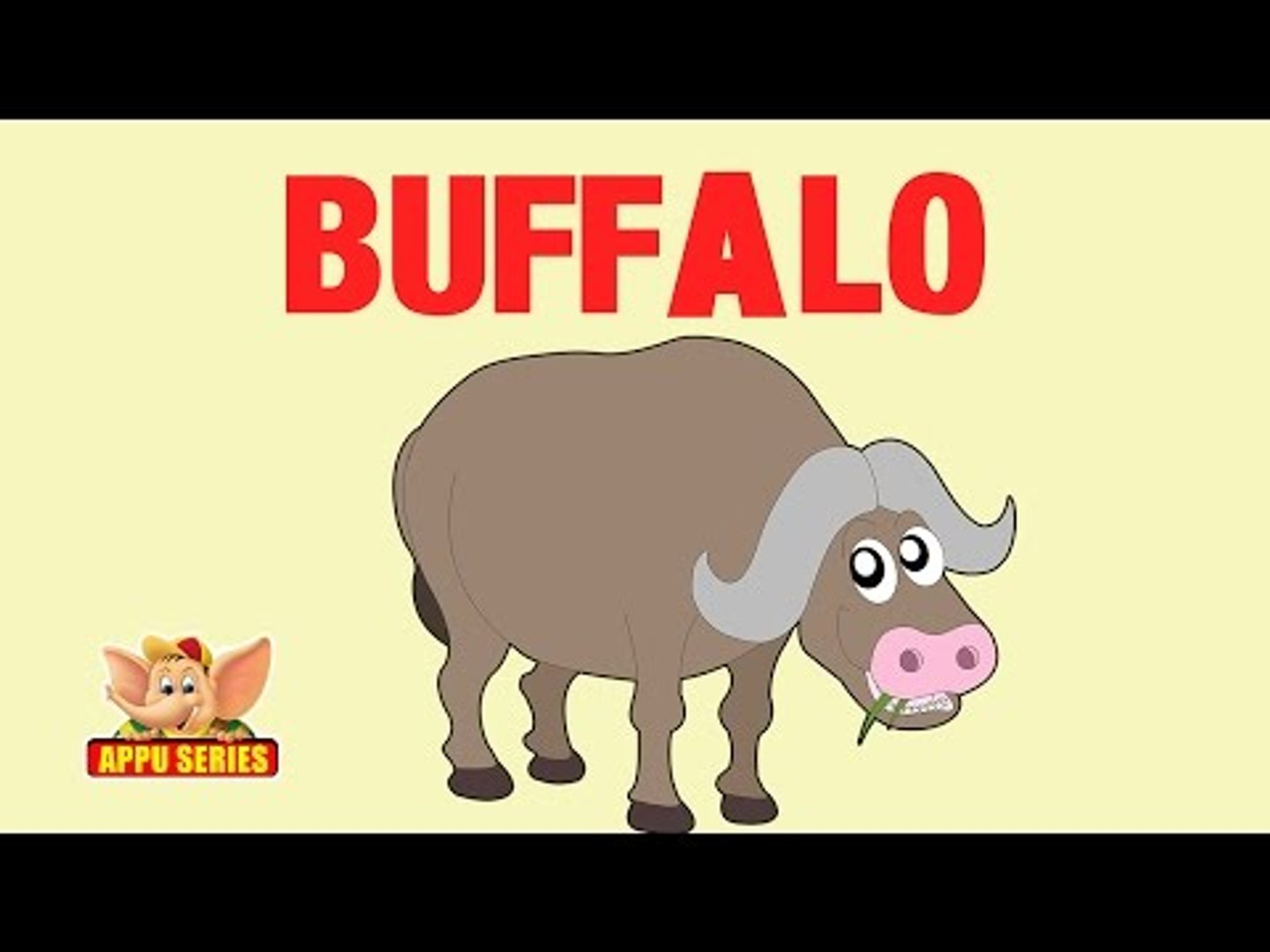 Animal Facts - Buffalo